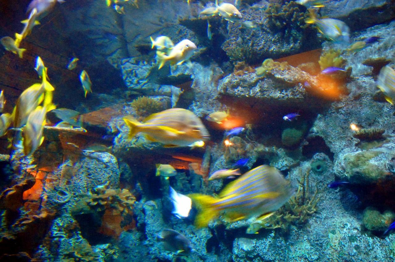 Shark Reef Aquarium Mandalay Bay